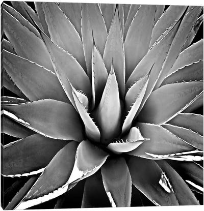 Black & White Succulent III Canvas Art Print