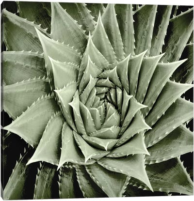 Green Succulent I Canvas Art Print