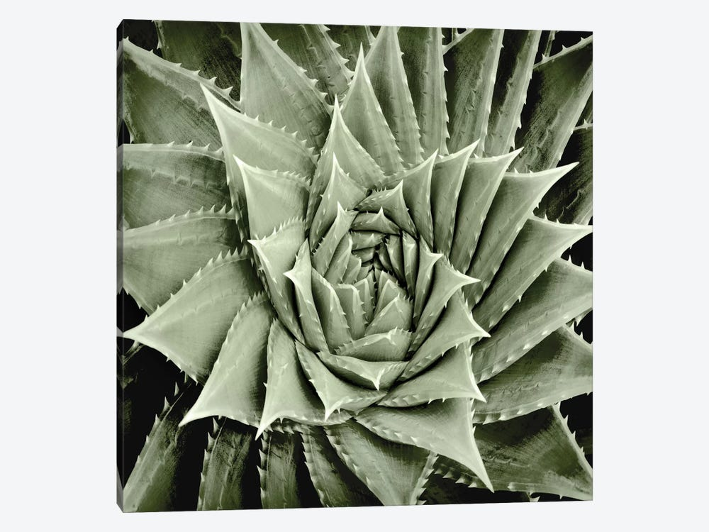 Green Succulent I by Mia Jensen 1-piece Canvas Wall Art