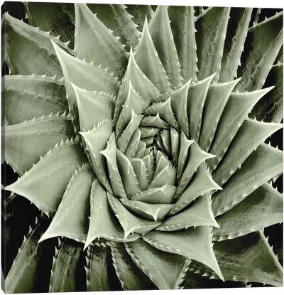 Green Succulent I Canvas Art Print
