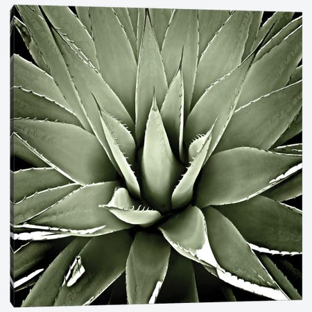 Green Succulent III Canvas Print #MIA7} by Mia Jensen Art Print