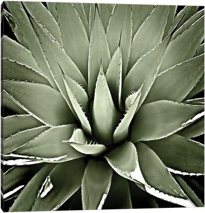 Green Succulent III Canvas Art Print