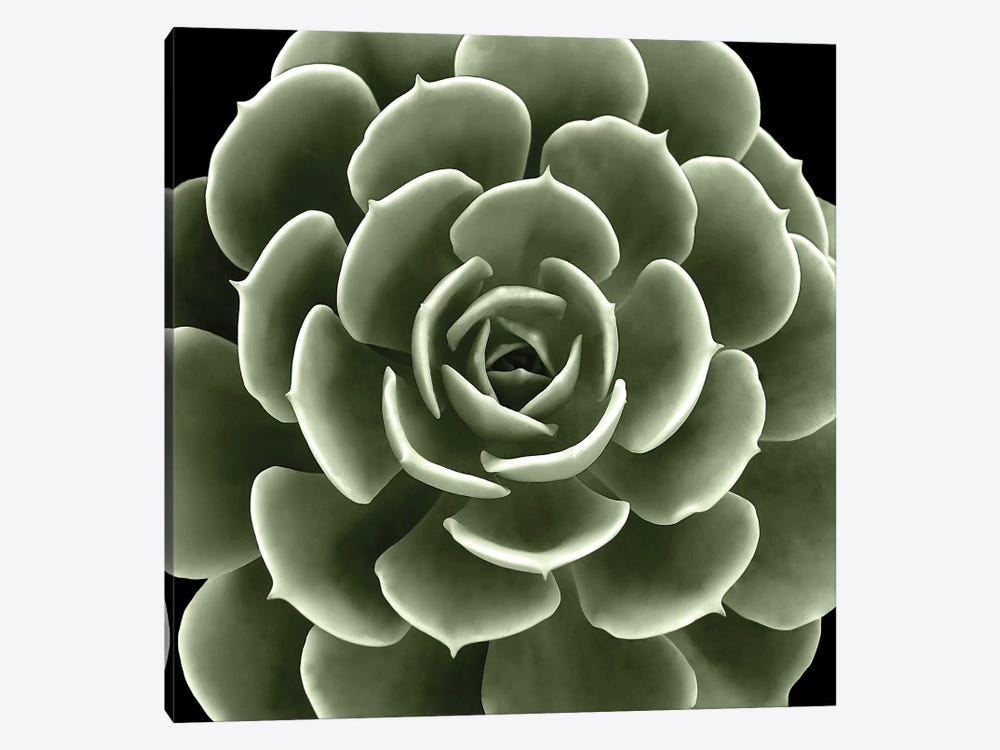Green Succulent IV by Mia Jensen 1-piece Canvas Print