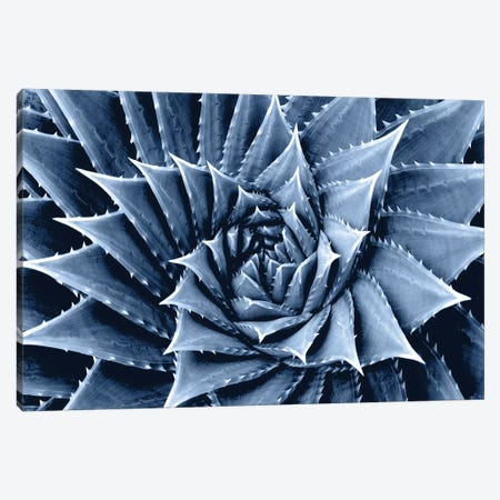 Indigo Succulent I Canvas Print #MIA9} by Mia Jensen Canvas Art