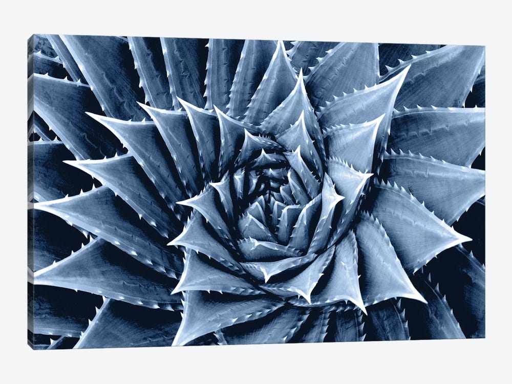 Indigo Succulent I by Mia Jensen 1-piece Canvas Artwork
