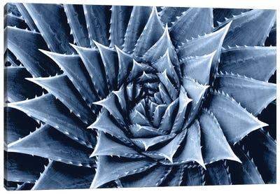 Indigo Succulent I Canvas Art Print