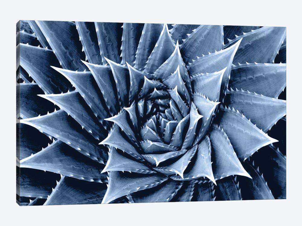 Indigo Succulent I by Mia Jensen 1-piece Canvas Artwork