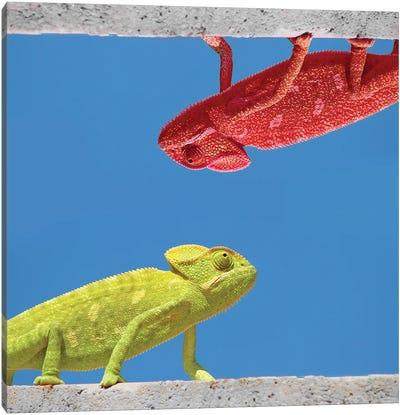Two Different Chameleons Canvas Art Print