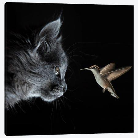 Cat And Hummingbird Met In The Dark Canvas Print #MII181} by Mike Kiev Art Print