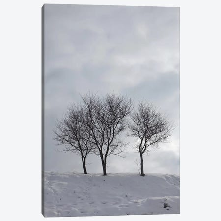 Three Bare Trees On A Snowy Hill Canvas Print #MII202} by Mike Kiev Canvas Art