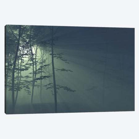Rays Of The Sun In A Foggy Forest II Canvas Print #MII239} by Mike Kiev Canvas Art Print
