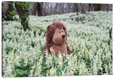 Hedgehog In A Blooming Meadow II Canvas Art Print