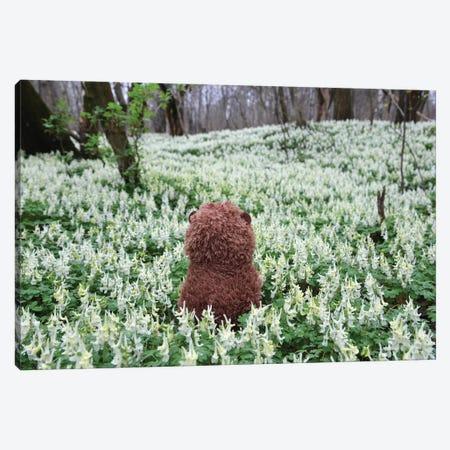 Hedgehog In A Blooming Meadow III Canvas Print #MII245} by Mike Kiev Canvas Print