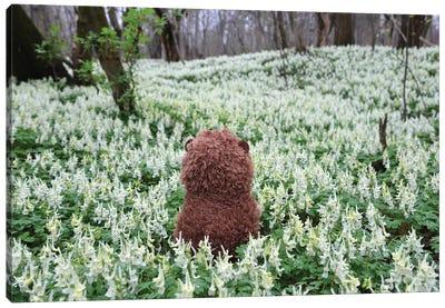 Hedgehog In A Blooming Meadow III Canvas Art Print