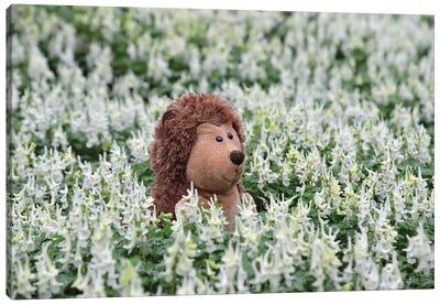 Hedgehog In A Blooming Meadow I Canvas Art Print