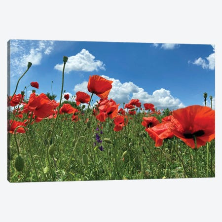 Wild Red Poppies On The Field IV Canvas Print #MII286} by Mike Kiev Canvas Print