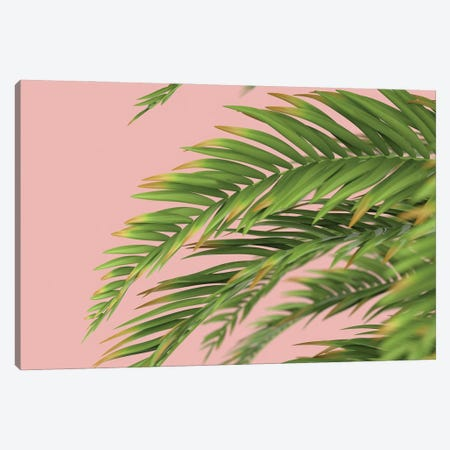 Palm Branch On A Peach Background I Canvas Print #MII67} by Mike Kiev Canvas Art