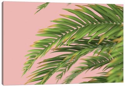 Palm Branch On A Peach Background I Canvas Art Print