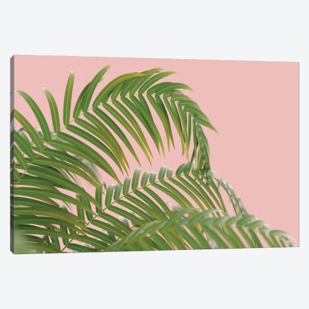 Palm Branch On A Peach Background II Canvas Print #MII69} by Mike Kiev Canvas Print
