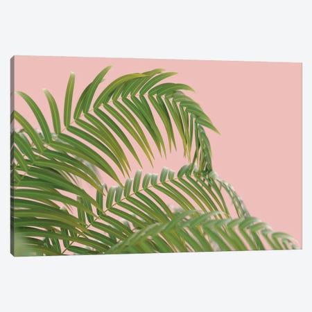 Palm Branch On A Peach Background II Canvas Print #MII69} by Mike Kiev Canvas Print