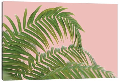 Palm Branch On A Peach Background II Canvas Art Print