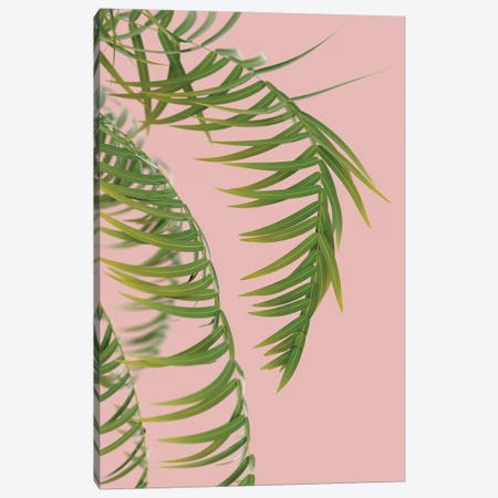 Palm Branch On A Peach Background III Canvas Print #MII71} by Mike Kiev Canvas Artwork