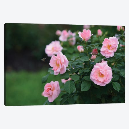 Garden Of Blooming Roses I Canvas Print #MII74} by Mike Kiev Canvas Art Print