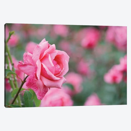 Garden Of Blooming Roses II Canvas Print #MII75} by Mike Kiev Art Print