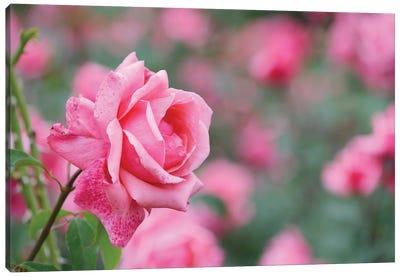 Garden Of Blooming Roses II Canvas Art Print
