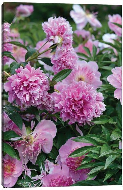 Garden Of Blooming Peony I Canvas Art Print