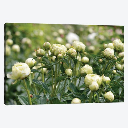 Garden Of Blooming Peony III 3-Piece Canvas #MII78} by Mike Kiev Canvas Wall Art