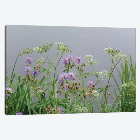 wet wild flowers by the lake Canvas Print #MII86} by Mike Kiev Canvas Wall Art