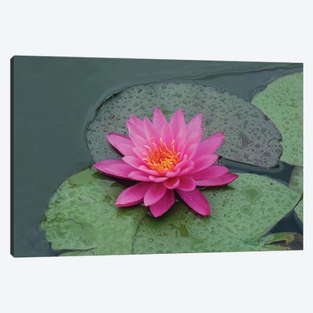 red lotus flower in water Canvas Print #MII87} by Mike Kiev Canvas Wall Art
