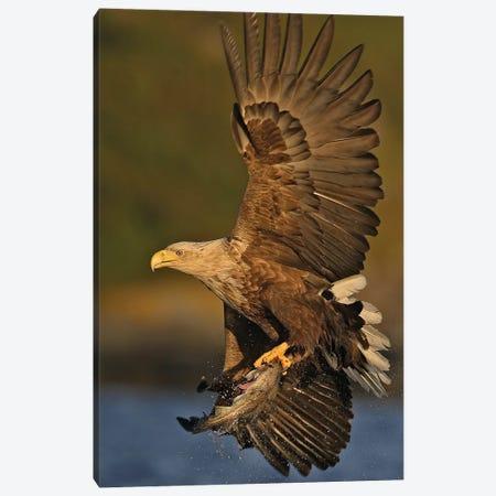 Eagle Norway II Canvas Print #MIU13} by Miguel Lasa Canvas Artwork