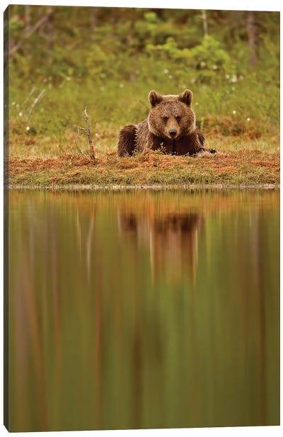 Bears Finland VI Canvas Art Print