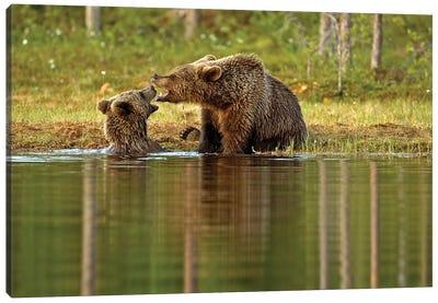 Bears Finland X Canvas Art Print
