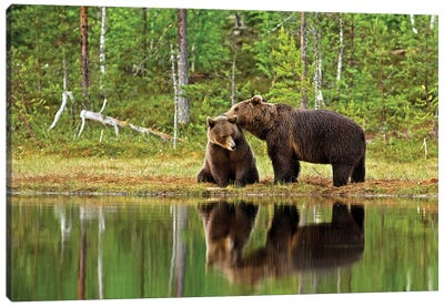 Bears Finland XI Canvas Art Print