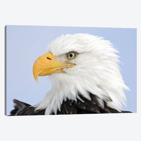Eagles Alaska I Canvas Print #MIU158} by Miguel Lasa Canvas Art Print