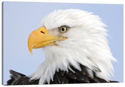 Eagles Alaska I Canvas Art Print
