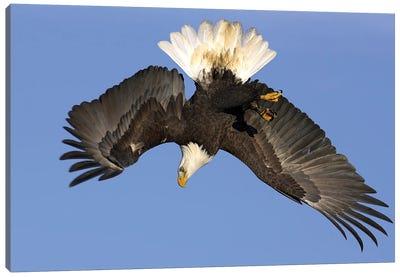 Eagle Alaska XIV Canvas Art Print