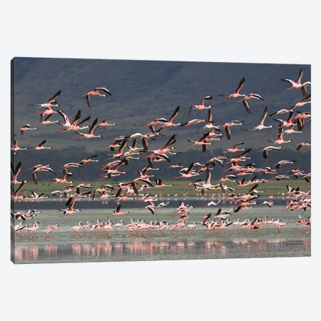 Flamingos Africa Canvas Print #MIU16} by Miguel Lasa Canvas Print