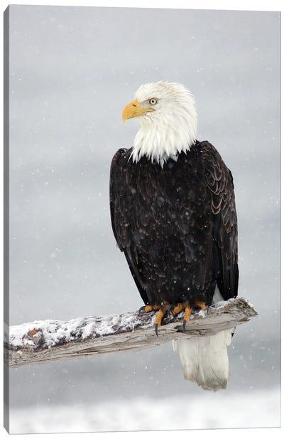 Eagle Snow Canvas Art Print