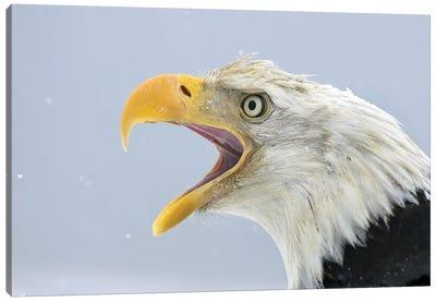 Eagle Alaska XXIV Canvas Art Print