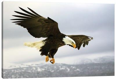 Eagle Alaska XXV Canvas Art Print