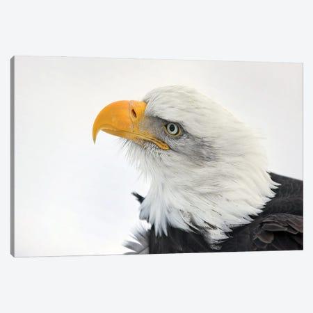 Eagle Alaska XXVI Canvas Print #MIU178} by Miguel Lasa Canvas Art Print