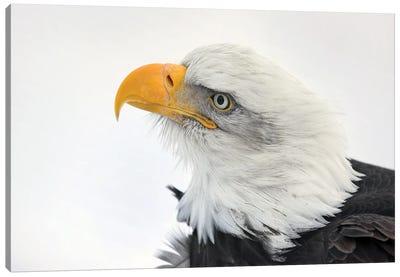 Eagle Alaska XXVI Canvas Art Print
