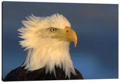 Eagle Alaska XXXI Canvas Art Print