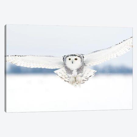 Snowy Canada VI Canvas Print #MIU193} by Miguel Lasa Art Print