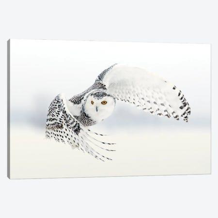 Snowy Canada XVII Canvas Print #MIU205} by Miguel Lasa Canvas Art