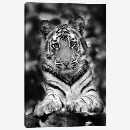 Tiger Black And White India I Canvas Print #MIU224} by Miguel Lasa Canvas Wall Art